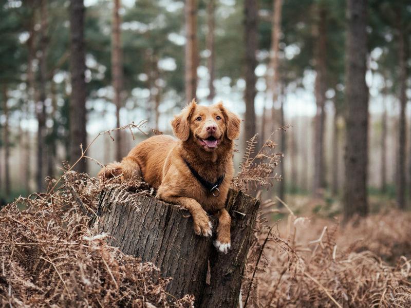 Un chien heureux en pleine forêt